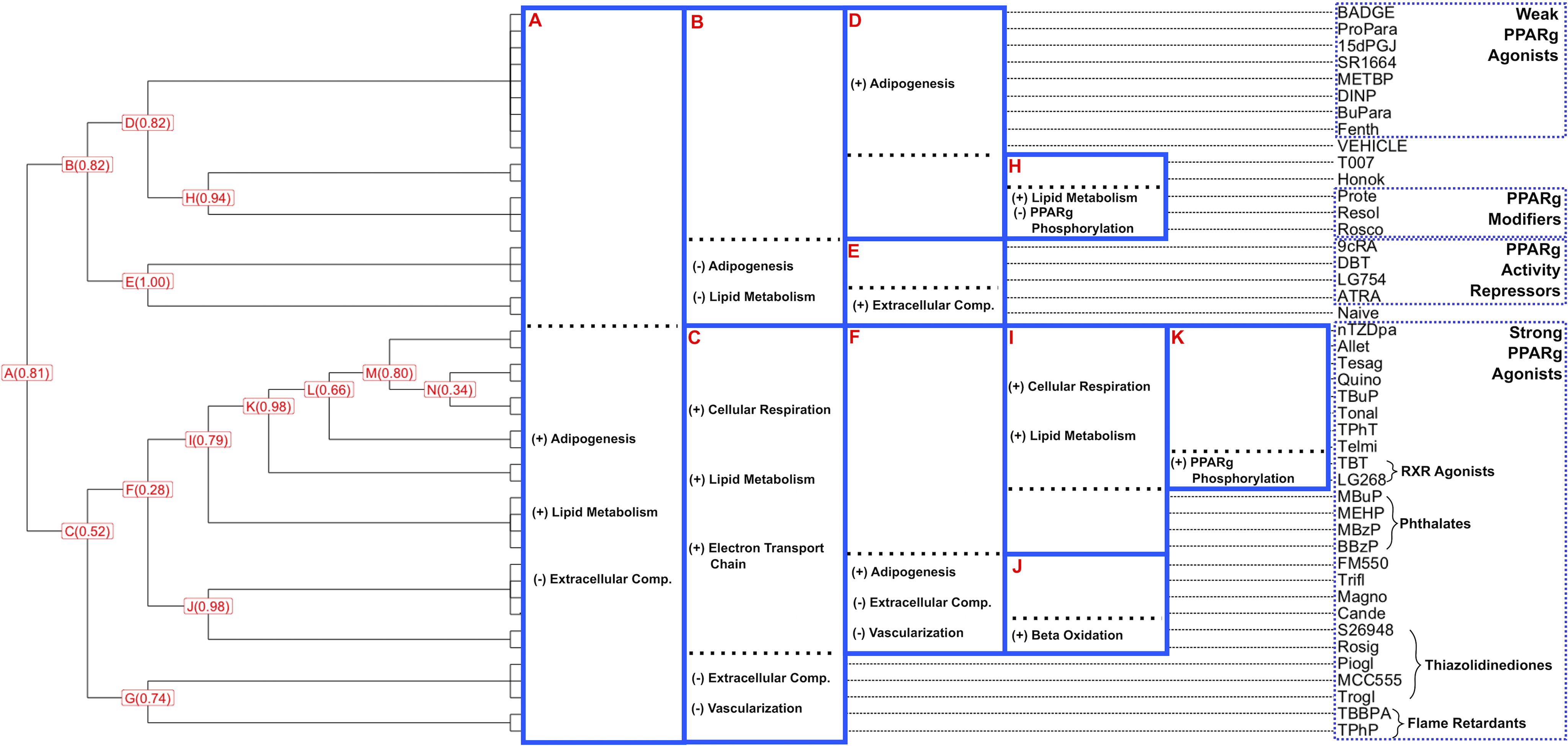 Figure 3 is a horizontal dendrogram graph, plotting Weak Peroxisome proliferator-activated receptor lowercase gamma agonists, including B A D G E, ProPara, 15dP G J, S R 1664, M E T B P, D I N P, BluPara, Fenth; Vehicle, T 007, Honok; Peroxisome proliferator-activated receptor lowercase gamma Modifiers, including Prote, Resol, Rosco; Peroxisome proliferator-activated receptor lowercase gamma activity repressors, including 9c R A, D B T, L G 754, A T R A; Naïve; Strong Peroxisome proliferator-activated receptor lowercase gamma Agonists, including n T Z D pa, Allet, Tessag, Quino, T B u P, Tonal, TPhT; R X R agonists, including T B T and L G 268; Phithalates, including M Bup, M E H P, B B z p P; F M , Trifl, Magno, Cande, Thiazolidinediones, including S 26948, Rosig, M C C 555, Trogl, and Flame Retardants, including T B B P A and T P h P (y-axis) across the proportion of gene-level bootstraps (x-axis) for uppercase a, including Adipogenesis, Lipid Metabolism, and Extracellular Comp.; uppercase b, including Adipogenesis and Lipid Metabolism; uppercase c, including cellular respiration, lipid metabolism, electron transport chain, extracellular comp., and vascularization; uppercase d, including Adipogenesis; uppercase e, including extracellular comp.; uppercase f, including Adipogenesis, extracellular comp., and vascularization; uppercase h, including lipid metabolism and Peroxisome proliferator-activated receptor lowercase gamma Phosphorylation; uppercase i, including cellular respiration and lipid metabolism; uppercase j, including beta oxidation; and uppercase k, including Peroxisome proliferator-activated receptor lowercase gamma Phosphorylation.