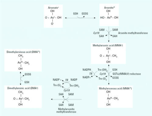 Folate, Homocysteine, and Arsenic Metabolism in Arsenic